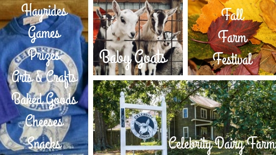 best every fun fall festival, baby goats, Celebrity Dairy Farm, fall leaves