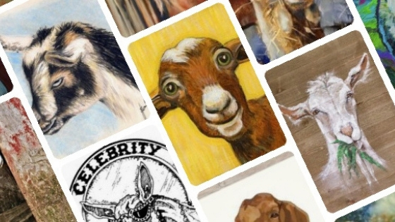 celebrity dairy's now on pinterest, drawings of goats and Celebrity Dairy logo